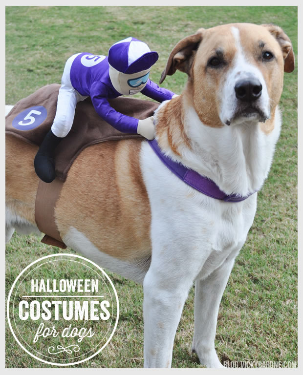 Things I Love: Halloween Costumes for Dogs