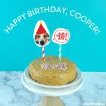 Happy 10th Birthday, Cooper!